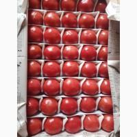 Продаем свежие помидоры/томаты оптом