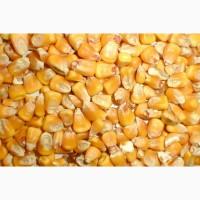 Купим отруби пшеничное и фуражная кукуруза