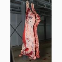 Мясо говядины 1 категории
