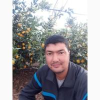 Оптом лимон