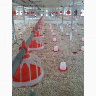 Бройлер - автоматика для выращивания птицы - климат контроль