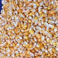 Кукуруза с поставкой на Ташкент