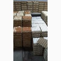 Tuhum optom sotamb import eksport