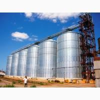 Пшеница 4 класса. Новый урожай 2020 года