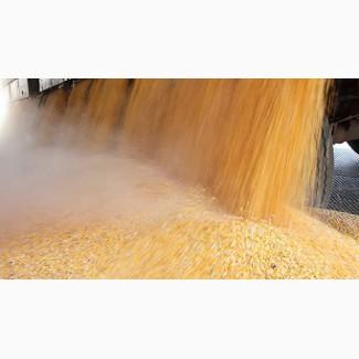 Кукуруза - ЖД поставки в Узбекистан