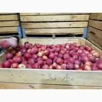 Яблоки оптом. Урожай 2019 года