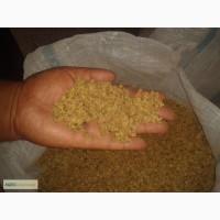 Семена лука чернуша продажа