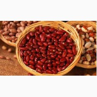 Фасоль Красная из Солнечного Узбекистана на экспорт