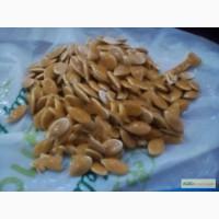 Продам семена тыквы