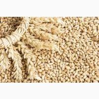 Продам муку, отруби, пшеницу Казахстан