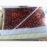 Черешня на Экспорт из Солнечного Узбекистана