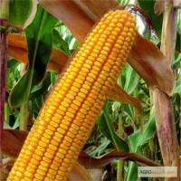 Продам семена кукурузы кормовой, GOLDEN WEST