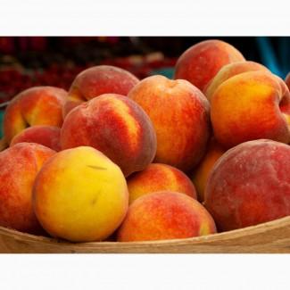 Куплю абрикос
