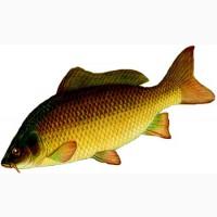 Ихтиолог-рыбовод (Консультация ихтиолога)