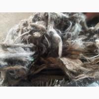 Продам овечья шерсть мытая грубая
