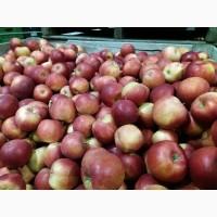 Продам яблоко Польша