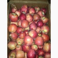 Продаеотса яблока в болшом количестве Голдэн u Пять звездa