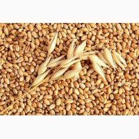 Пшеница 3 класс