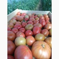 Продам помидоры розовый красный оптом