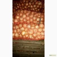 ЛУК качественный - поставщик из Украины - Овощи, фрукты