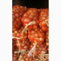 Продаётся лук сортированный для экспорта 65 тн