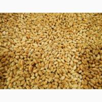 Пшеница 4-ого класса