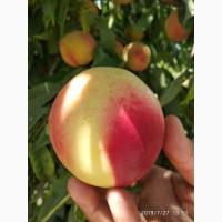 Персики на экспорт