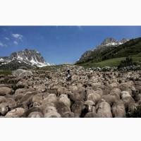 Лошади, крс, овцы, маралы
