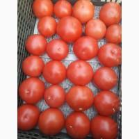 Продаю оптом разные сорта помидор