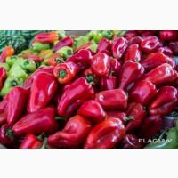 Экспорт Болгарский перец из Узбекистана