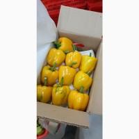 Продам Перец толстый (Красный, Желтый, Зеленый) оптом