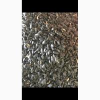 Семена подсолнуха
