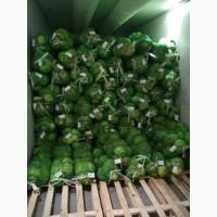 Оптовые поставки свежих овощей из Узбекистана