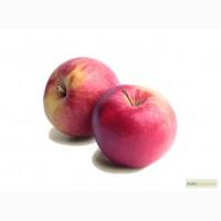 Продам яблоки голден
