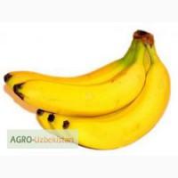 Продажа бананов декоративных