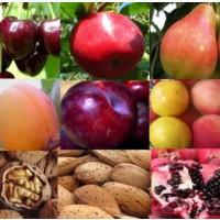 Саженцы плодовых и декоративных деревьев а также роз