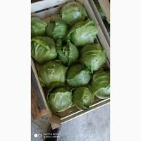 Продам молодую и пекинскую капусту черешню и абрикосы от производителя