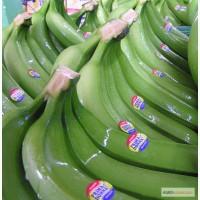 Бананы зеленые продажа