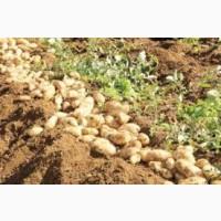 Кредит для фермера и кооператива