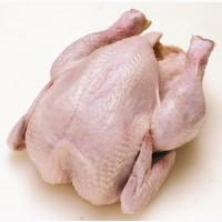 Продам мясо курицы бройлера