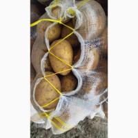 Доставка картофеля из ирана в узбекистан