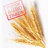 Реализуем зерновые культуры