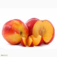 Лысый персик сорт нектарин. Продажа