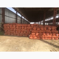 Продам лук Оптом 300 тонн
