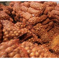 Продам лук оптом от 20 т ( 300+ тонн)