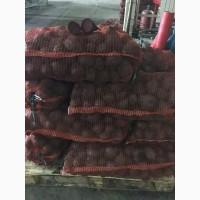 Картофель молодой с доставкой в Узбекистин