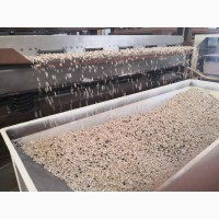 Линия для очистки, шелушения и сепарации семян подсолнечника TFKH NEW