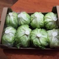 Куплю 12 тонн салата Айзберг