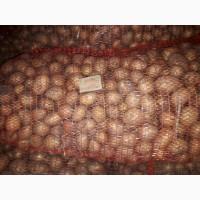 Картофель семенной полтарашка