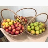 Продадим оптом яблоки
